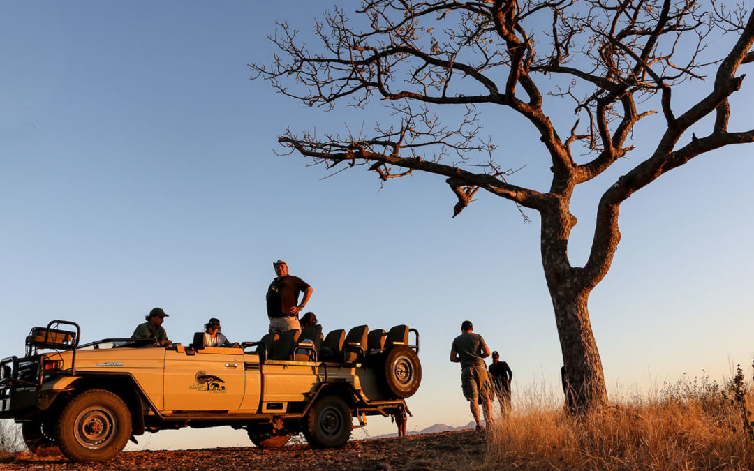 Five ways to get the most out of your safari.