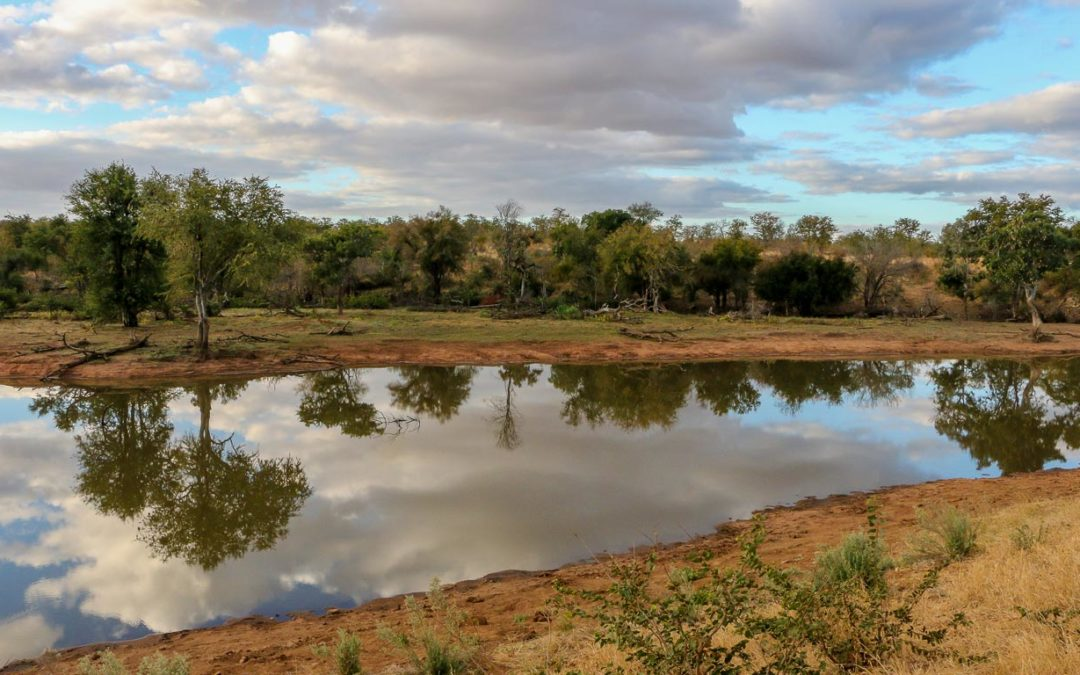 A four-night stay at nDzuti Safari Camp