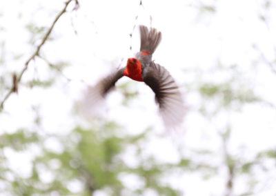 flying-bird-1024x683-v1