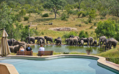 nDzuti Safari Camp – Greater Kruger – Sole Use 2020